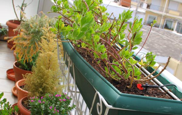 Βεράντα - φυτά 2