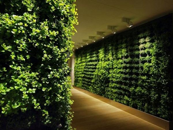 Indoor gardens - 1