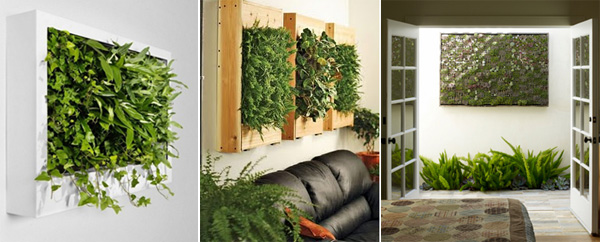 Indoor gardens - 4