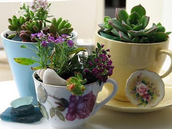 teacup_1